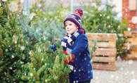 A child looks at a Christmas tree at Our Lady of Grace men's club Christmas tree lot.