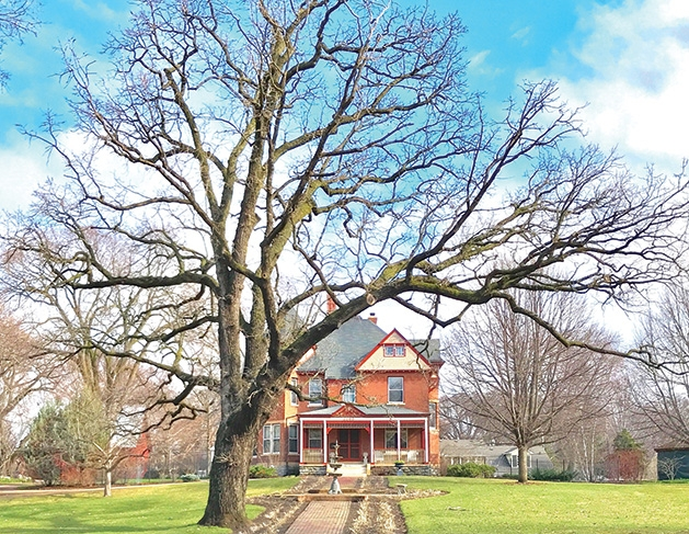 An historic oak tree and farm house in Edina.