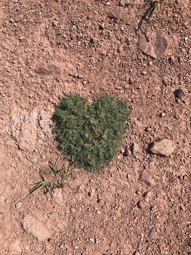A patch of grass shaped like a heart.
