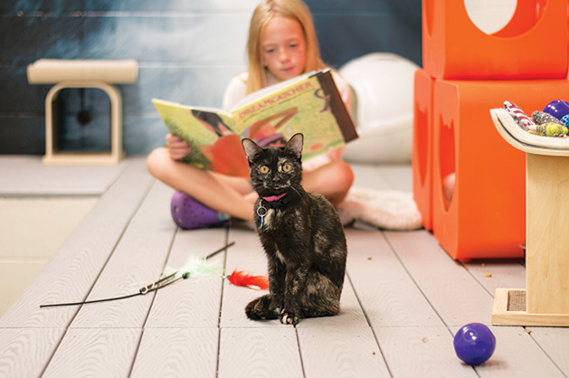 A young girl reads to a cat at the Animal Humane Society.