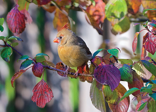 A colorful photograph of a bird on a tree branch.